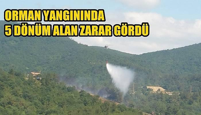 Lapseki'deki orman yangınında 5 dönüm alan zarar gördü