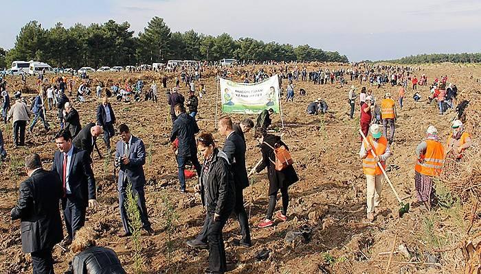 Çanakkale'de 205 bin fidan toprakla buluşturuldu (VİDEO)