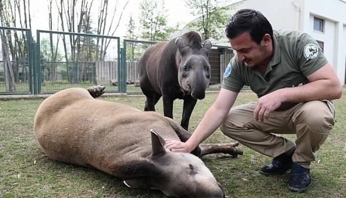 Masaj salonu değil hayvanat bahçesi