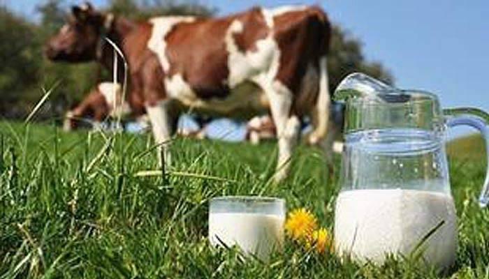 Arz fazlası 180 bin ton çiğ süt süttozuna dönüştürülecek