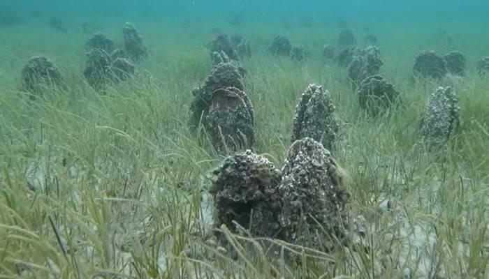 Çanakkale Boğazı'nda 'Pina' mezarlığı görüntülendi (VİDEO)
