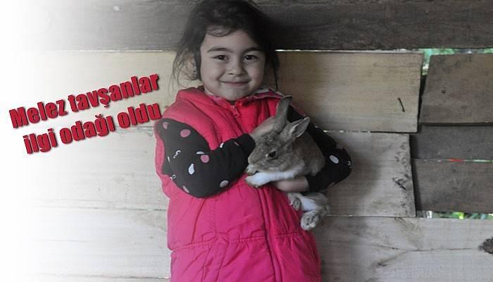 Melez tavşanlar ilgi odağı oldu (VİDEO)