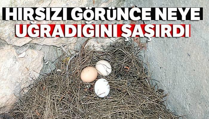Yumurtaları çalınınca güvenlik kamerası yerleştirdi, hırsızı görünce neye uğradığını şaşırdı