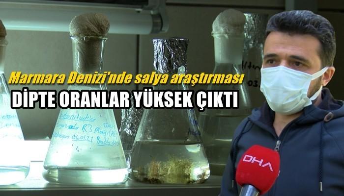 Marmara Denizi'nde salya araştırması: DİPTE ORANLAR YÜKSEK ÇIKTI (VİDEO)