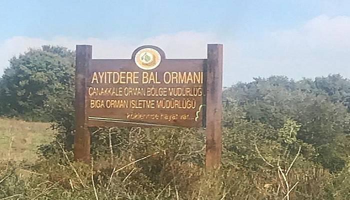 Ayıtdere Bal Ormanında Fidan Dikimi Tamamlandı