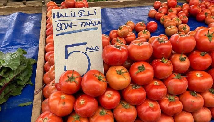 Tarla domatesi sezona veda ediyor