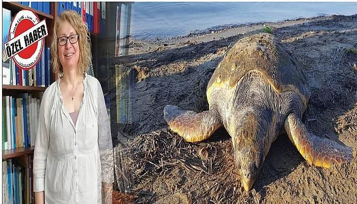 """""""Bir yerde deniz kaplumbağası yaşıyorsa, orası sağlıklıdır"""""""