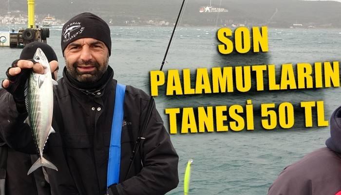 Çanakkale'de son palamutlar tanesi 50 liradan satılıyor (VİDEO)