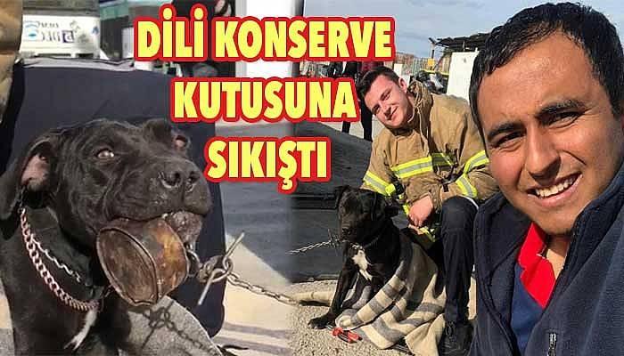 Yavru köpeği itfaiyeciler kurtardı (VİDEO)