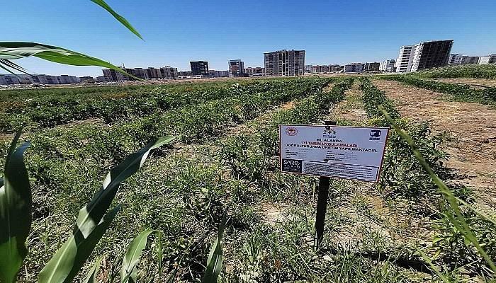 Belediyenin yetiştirdiği ürünler artık 'İyi Tarım Sertifikalı'