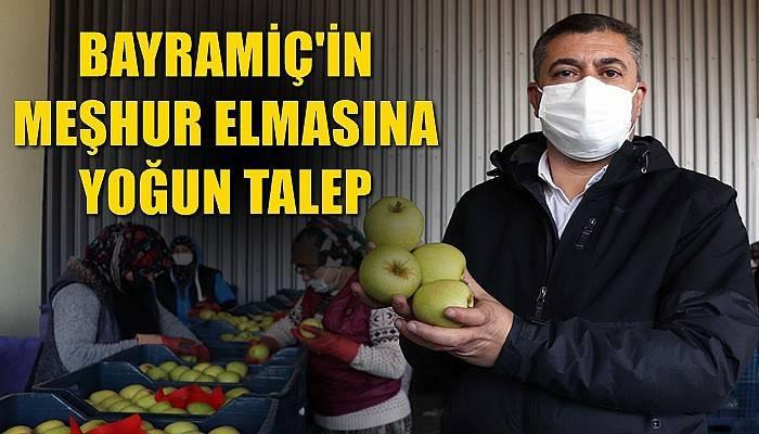 Bayramiç'in meşhur elmasına yoğun talep (VİDEO)