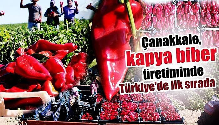 Çanakkale, kapya biber üretiminde Türkiye'de ilk sırada (VİDEO)