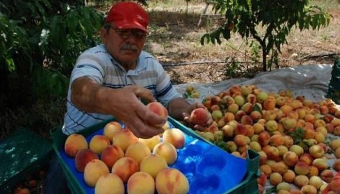 Türk çiftçisinin Afgan üreticiden neyi eksik?