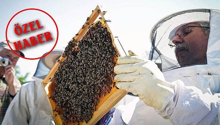 Organik adanın organik arıları (VİDEO)
