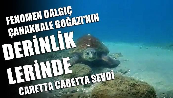 Nesli tükenmekte olan caretta caretta Çanakkale Boğazı'nda böyle görüntülendi (VİDEO)