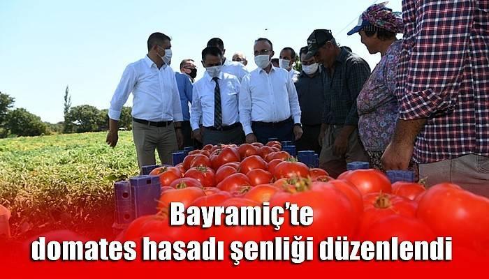Bayramiç'te domates hasadı şenliği düzenlendi (VİDEO)