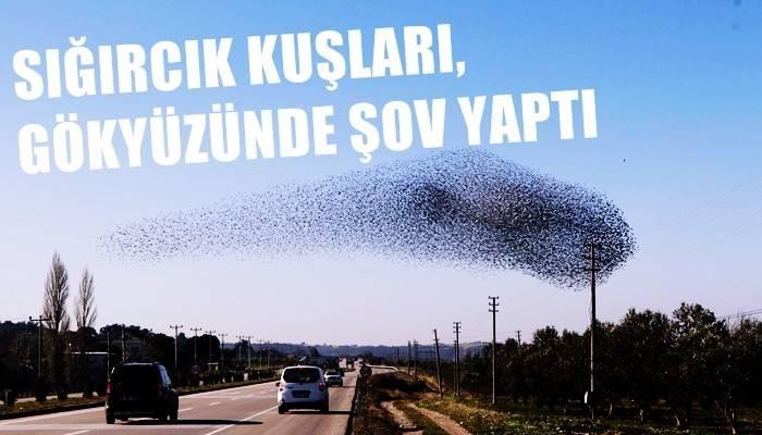 Çanakkale'de sığırcık kuşlar, gökyüzünde şov yaptı (VİDEO)