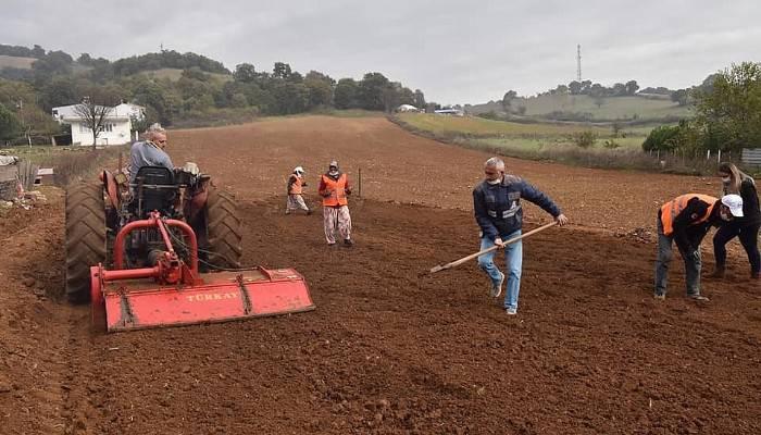 Çan Belediyesi 20 bin salep fidesini toprakla buluşturuyor