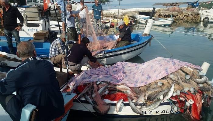 Saros Körfezi'nde 1,5 ton kefal yakaladı (VİDEO)
