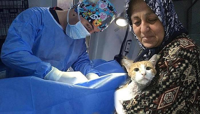Kediye başarılı ameliyat