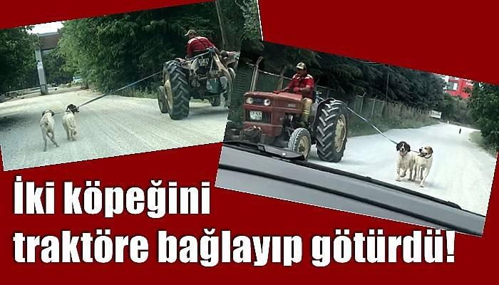 İki köpeğini traktöre bağlayıp götürdü