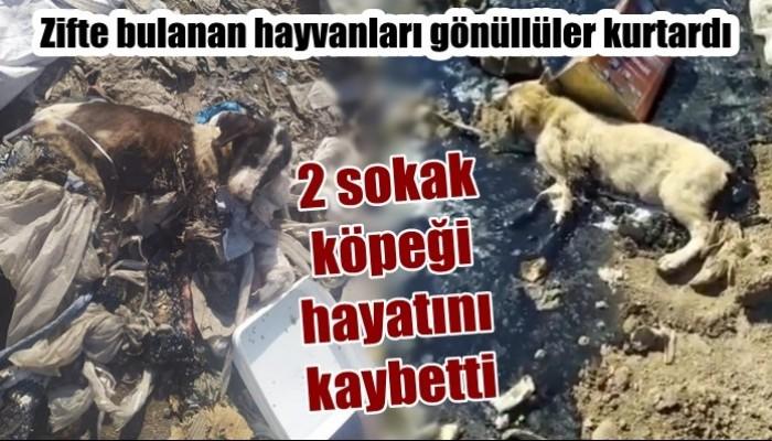 Zifte bulanan hayvanları gönüllüler kurtardı: 2 sokak köpeği hayatını kaybetti