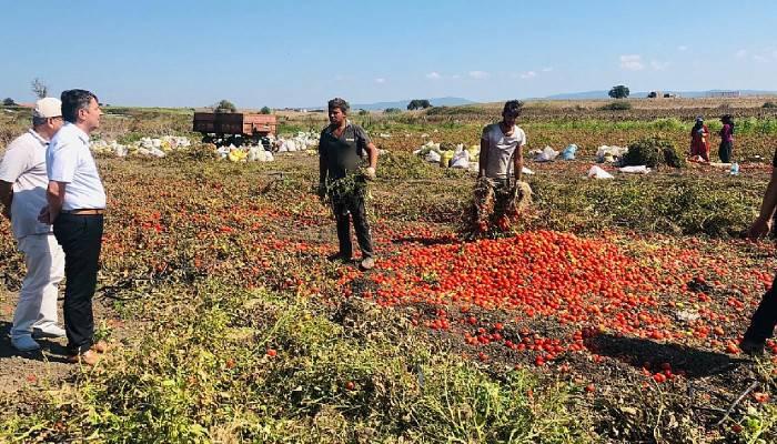 """""""Seneye ne domates kalır ne çiftçi"""""""
