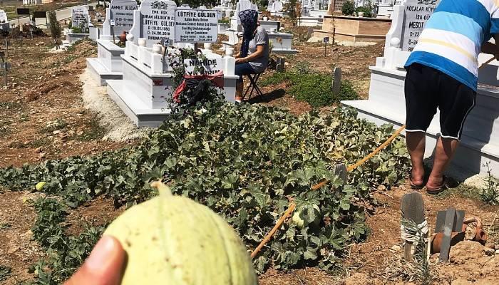 Kavun bostanı değil mezarlık