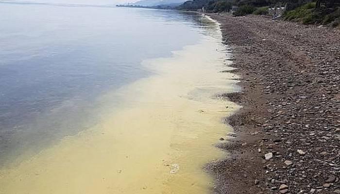 Assos sahilinde tedirgin eden görüntü (VİDEO)