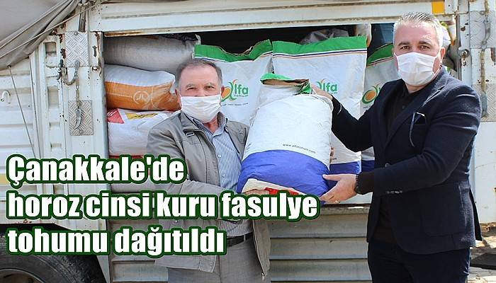 Çanakkale'de horoz cinsi kuru fasulye tohumu dağıtıldı