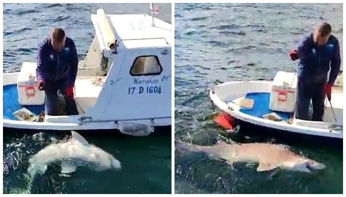 2,5 metre boyunda köpek balığı yakaladı