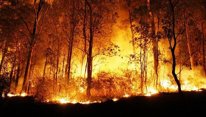 """""""Çanakkale'de orman yangını sayıları her geçen yıl artıyor"""""""