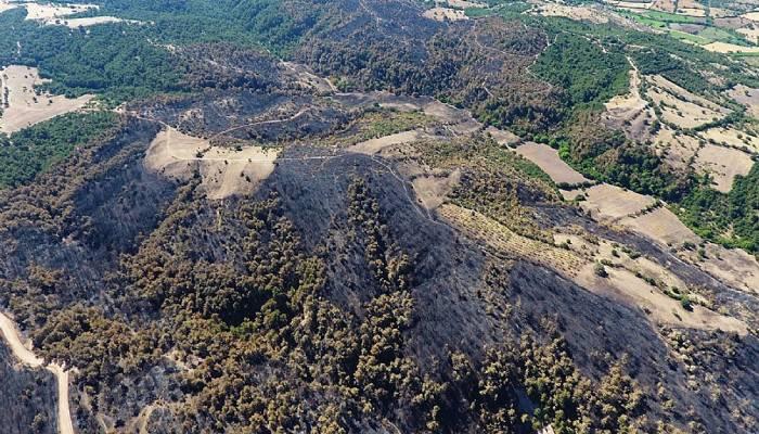 Çanakkale'de yanan orman alanları ilk kez drone ile görüntülendi (VİDEO)