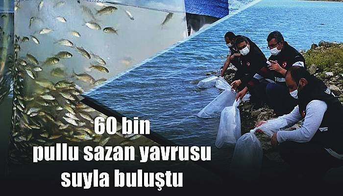 60 bin pullu sazan yavrusu suyla buluştu