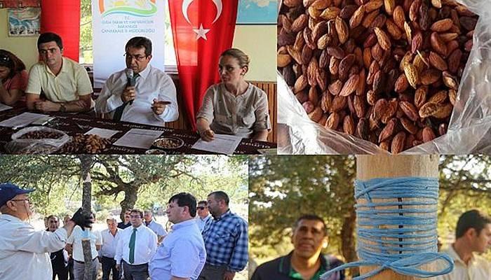 Çanakkale'de Antepfıstığı Aşılama Projesi Başlatıldı