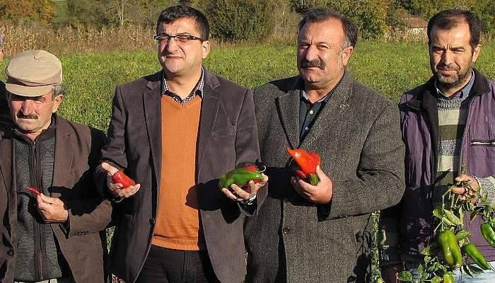 CHP milletvekili Öz, Kapya biber üreticileriyle görüştü