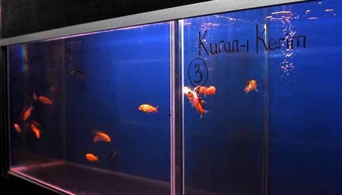 Kur'an-ı Kerim ve Tasavvuf Musikisi dinletilen balıklar daha çabuk büyüdü (VİDEO)
