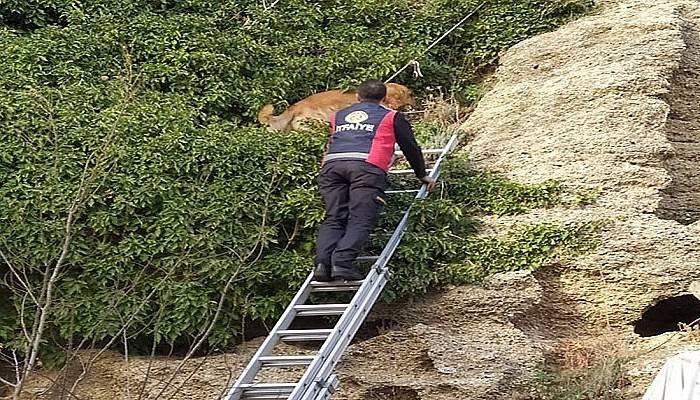Kayalıklarda mahsur kalan köpeği itfaiye kurtardı (VİDEO)