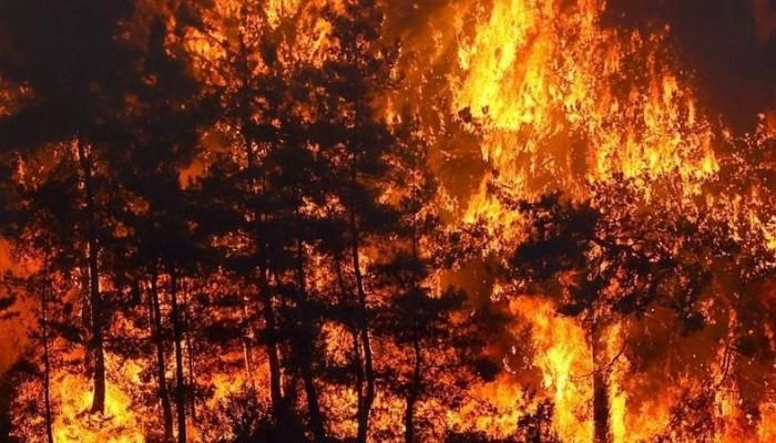 Orman yangınlarıyla ilgili duyduğu üzüntüyü paylaştı