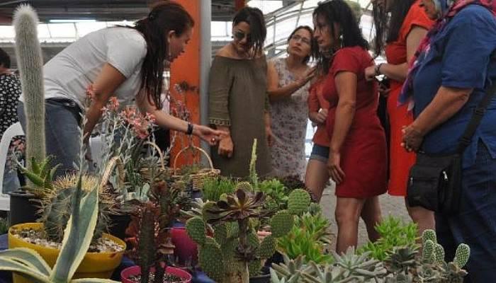 Hobi Olarak Başladı, Kaktüs Yetiştirerek Ev Ekonomisine Katkı Sağlıyor