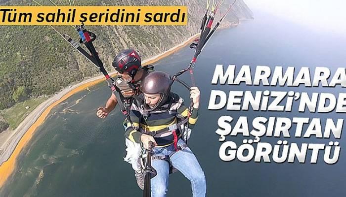 Marmara Denizi'nde şaşırtan görüntü