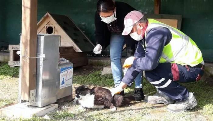 Kedi köyünde sağlık taramaları