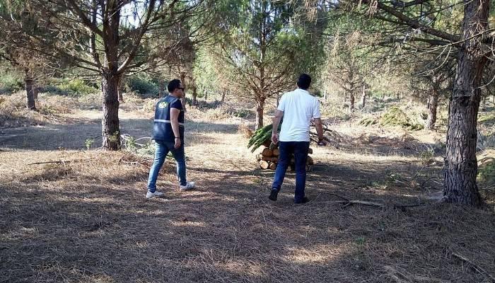Karabiga ormanlarında 'Genç Meşçere' bakımı sürüyor