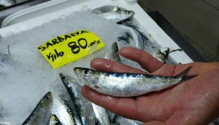Çanakkale'de balık tezgahlarında sardalyanın kilosu 80 lira (VİDEO)