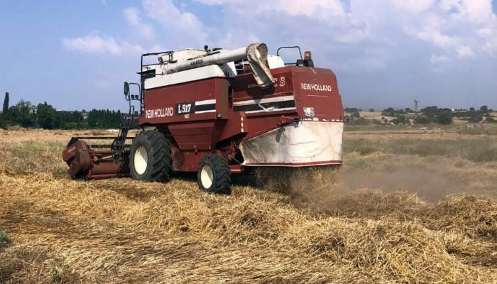 Atalık buğdaylar hasat edildi