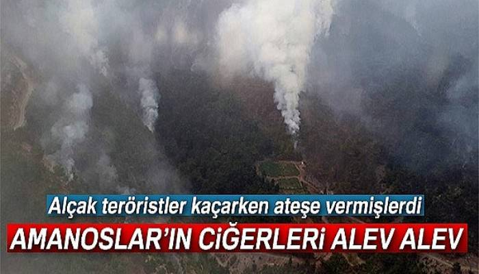 Teröristlerin çıkardığı orman yangını sürüyor