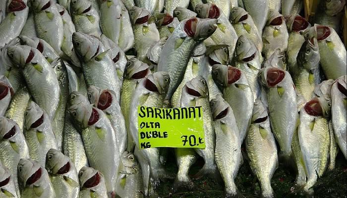 Çanakkale'de restoranlar kapalı, balık fiyatları düşük (VİDEO)