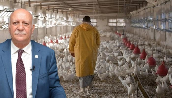 'Tavuk eti üretimi bir önceki yıla göre yüzde 7,1 azaldı'
