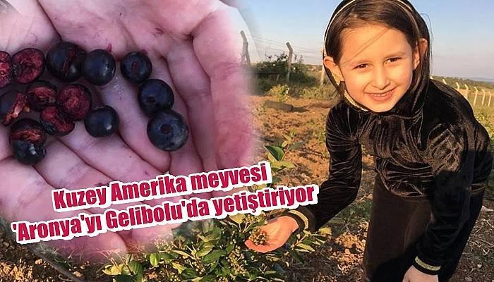Kuzey Amerika meyvesi 'Aronya'yı Gelibolu'da yetiştiriyor
