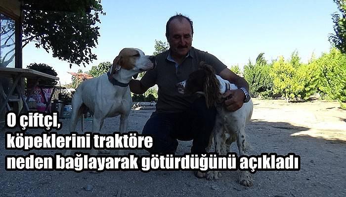 O çiftçi, köpeklerini traktöre neden bağlayarak götürdüğünü açıkladı (VİDEO)